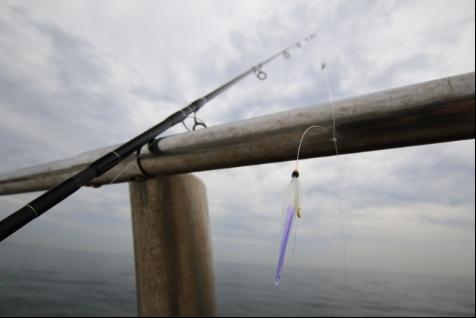 ショアジギングで魚が釣れない…そんな時はショアサビキを使おう