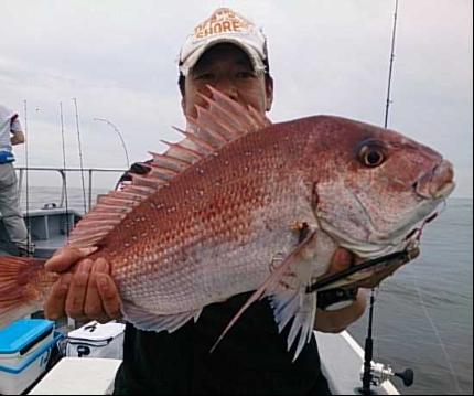 鯛はジグで釣る?タイラバで釣る?状況に合わせて選択しよう