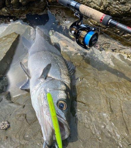 ヒラスズキはサラシと潮を読むと釣れる!20200529釣行記